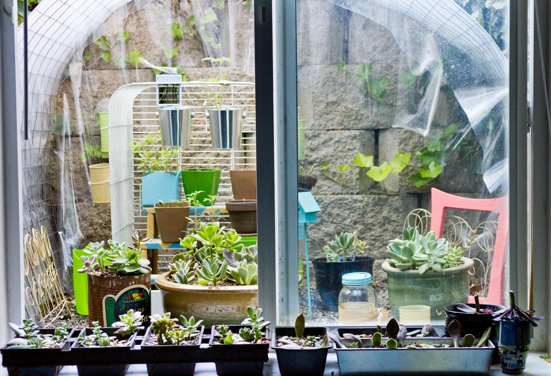 window well garden update succulents and sunshine