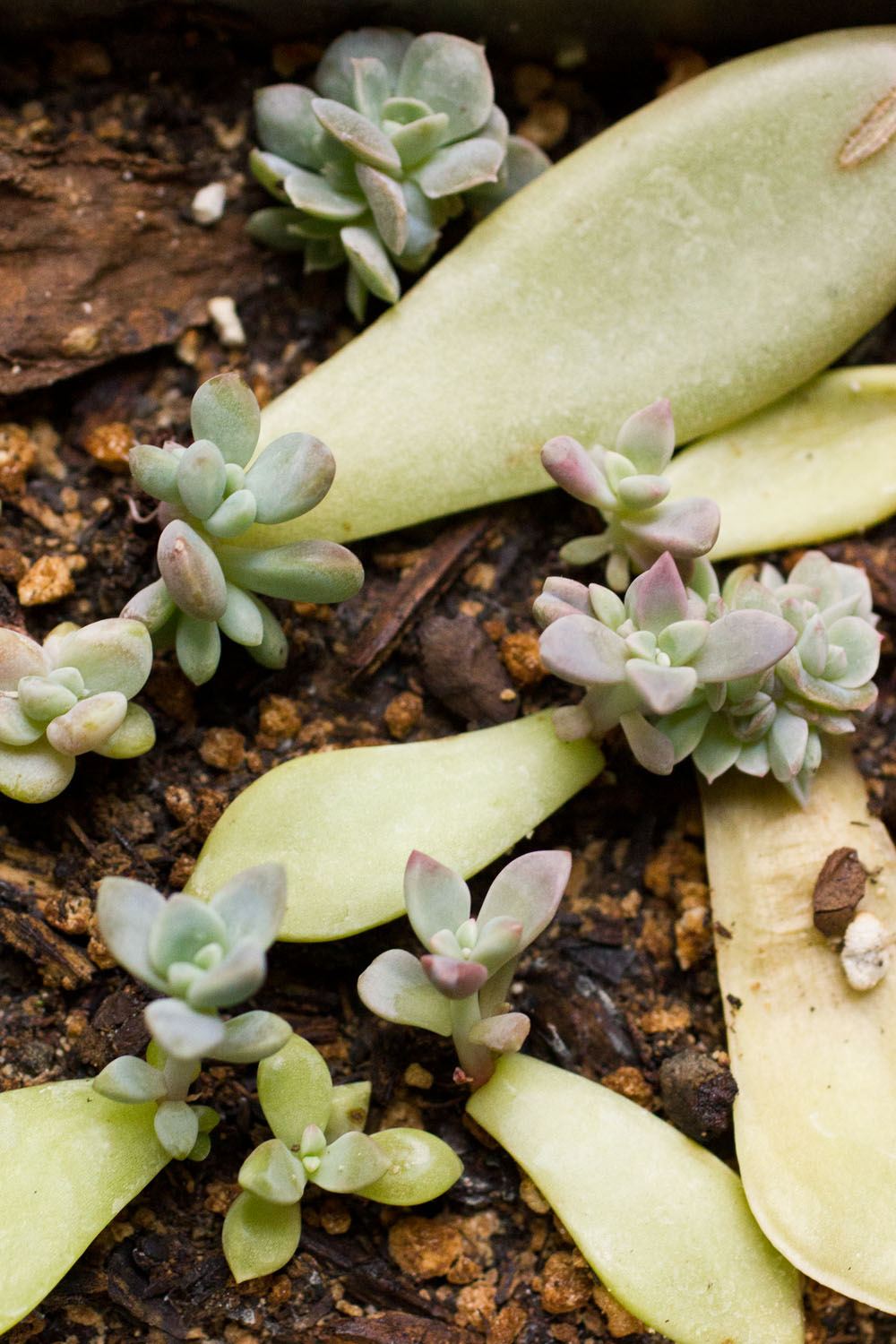 Growth Care And Propagating Succulents And Other Cacti February 2014