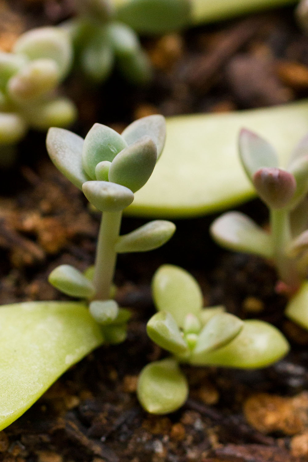 Growth Care And Propagating Succulents And Other Cacti 2014